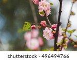 blooming tree. beautiful nature ... | Shutterstock . vector #496494766