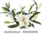 illustration with light lily... | Shutterstock .eps vector #496534048