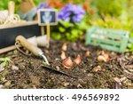Flower Bulbs And Garden...