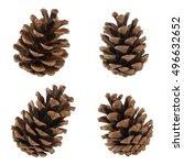 set of cones of coniferous... | Shutterstock . vector #496632652