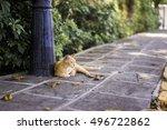 Ginger Cat Relaxing On An Urba...