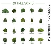 twenty different tree sorts... | Shutterstock . vector #496723972