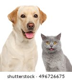 Stock photo cat and dog together close up portrait isolated on white 496726675