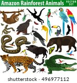 set of vector amazon rainforest ... | Shutterstock .eps vector #496977112
