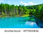 dry tree and forest at blue... | Shutterstock . vector #497003836