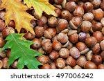 Leaves Of Oak Tree And Acorns....