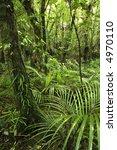 tropical forest | Shutterstock . vector #4970110
