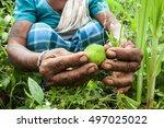 indigenous adivasi woman...   Shutterstock . vector #497025022