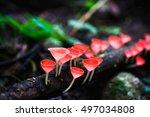 champagne mushroom in rain... | Shutterstock . vector #497034808