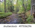 Small photo of Autumn in the Allegheny Mountains
