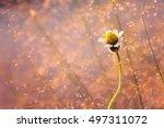 flower grass at relax morning... | Shutterstock . vector #497311072