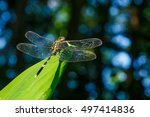 Dragonfly  Dragonfly Of...