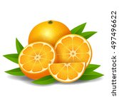 fresh ripe oranges with leaves | Shutterstock .eps vector #497496622