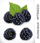 blackberry. sweet fruit. forest ... | Shutterstock .eps vector #497503222