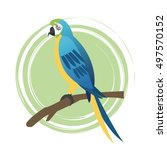 parrot bird cartoon design | Shutterstock .eps vector #497570152