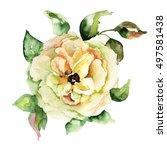 beautiful yellow flowers ...   Shutterstock . vector #497581438