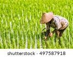 the farmer planting on the... | Shutterstock . vector #497587918