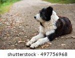 abandoned  sad  homeless stray... | Shutterstock . vector #497756968