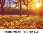 autumn trees on sun in park | Shutterstock . vector #497785168
