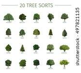 twenty different tree sorts... | Shutterstock .eps vector #497821135