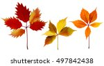 set of different colours autumn ... | Shutterstock . vector #497842438
