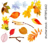 set of autumn leaves isolated... | Shutterstock . vector #497891662