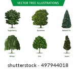 different tree sorts with names.... | Shutterstock .eps vector #497944018