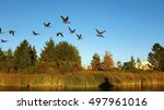 Canadian geese flying over a...