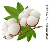 realistic cotton branch vector... | Shutterstock .eps vector #497998816