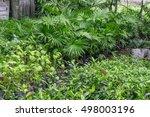 garden trees and plants...   Shutterstock . vector #498003196