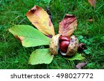 Conkers In Shell And Horse...