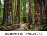 hiking trails through giant... | Shutterstock . vector #498108772