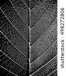 Black White Closeup Leaf...