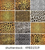 highly detailed leopard vector...