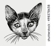 head of a kitten | Shutterstock .eps vector #498378658