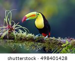Colorful Keel Billed Toucan ...