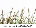 Foxtail Flower Isolated For...