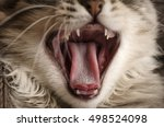 tongue of a cat  close up ... | Shutterstock . vector #498524098
