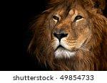 lion | Shutterstock . vector #49854733
