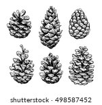 pine cone set. botanical hand... | Shutterstock .eps vector #498587452