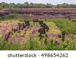 a farmer works in an irish bog... | Shutterstock . vector #498654262
