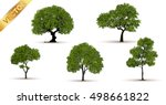 beautiful tree on a white... | Shutterstock .eps vector #498661822