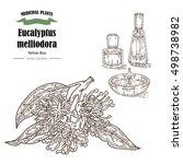 hand drawn eucalyptus leaves... | Shutterstock . vector #498738982