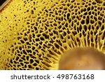 Boletus Mushroom Detail