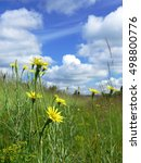 Small photo of flourishing intensely yellow dandelions Sonchus slightly soppy spring green meadow