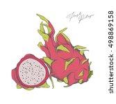 hand drawn pitaya. fresh exotic ... | Shutterstock .eps vector #498869158