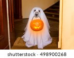 dog sit as a ghost for... | Shutterstock . vector #498900268