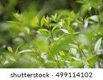 green fresh leaves | Shutterstock . vector #499114102