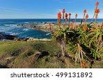 scenic coastline with flowering ... | Shutterstock . vector #499131892