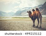 Small photo of Double hump camel setting off on its journey in the desert in Nubra Valley, Ladakh, India (Vintage tone)